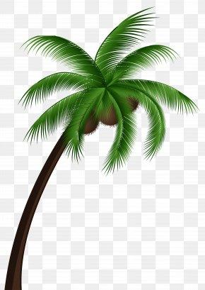 Coconut Tree - Coconut Arecaceae Tree Clip Art PNG