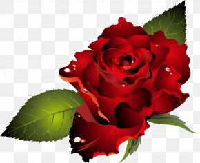 Red Rose - Valentine's Day Dia Dos Namorados Heart Clip Art PNG