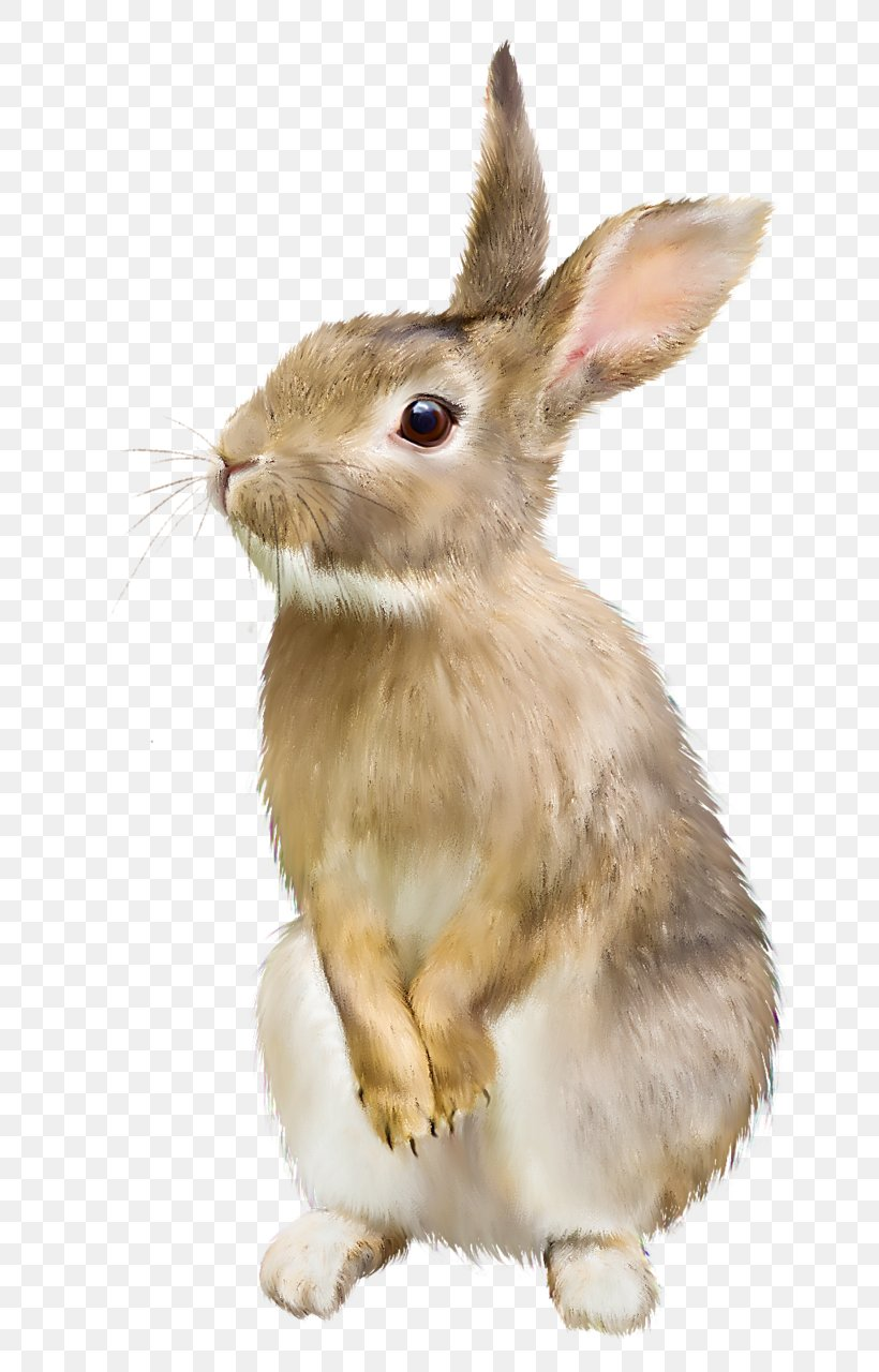 Rabbit Hare Clip Art, PNG, 762x1280px, Hare, Document, Domestic Rabbit, Fauna, Fur Download Free