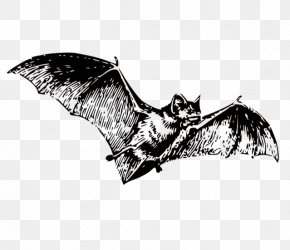 Bat - Bat Black And White Clip Art PNG
