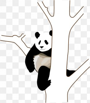 Panda Bear Outline - Giant Panda Bear Red Panda Clip Art PNG