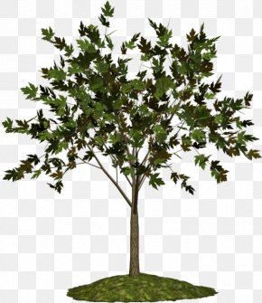 Tree - Twig Plane Trees Plant Blog PNG