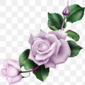 Flower - Blue Rose Flower Garden Roses Clip Art PNG