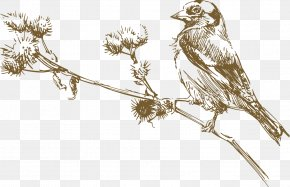 Sparrow On The Branch Vector - Bird Euclidean Vector Drawing Illustration PNG