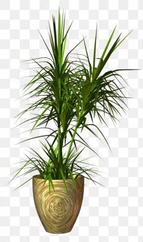 Plants - Palm Trees Aquarium Aquatic Plants PNG