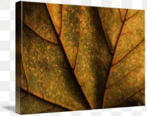 Leaf - Gallery Wrap Canvas Leaf Art Imagekind PNG