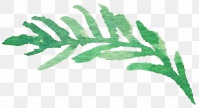 Leaf - Leaf Download PNG