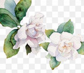 White Flower - Flower White Leaf Euclidean Vector PNG