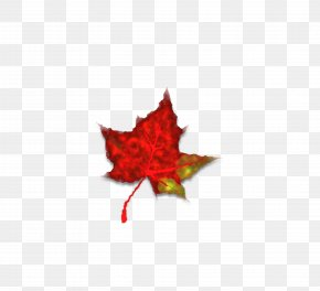 Autumn - Maple Leaf Japanese Maple Autumn Leaf Color Red Maple PNG