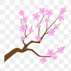 Cut Flowers Spring - Cherry Blossom PNG