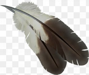 Feather - Feather Computer File PNG