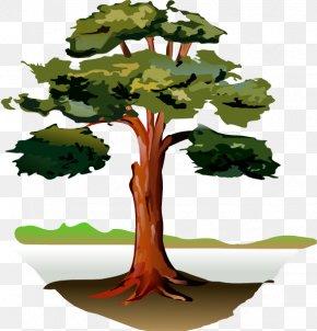 Eucalyptus Leaves - Southern Live Oak Gum Trees Clip Art PNG
