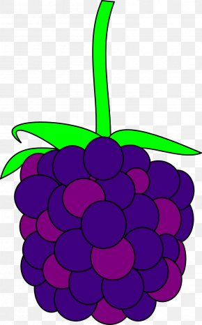 A Bunch Of Grapes - Blackberry Clip Art PNG
