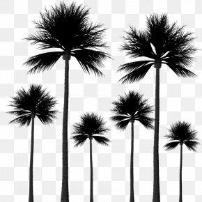 Tree - Arecaceae Tree Sabal Palm Silhouette PNG