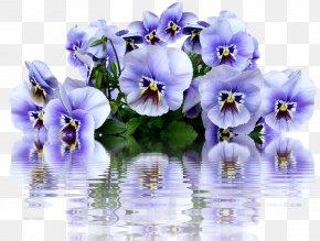 Flower - Pansy Garden Centre Flower Clip Art PNG