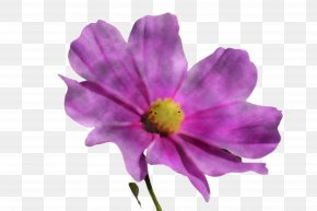 Anemone Wildflower - Flower Petal Purple Violet Plant PNG