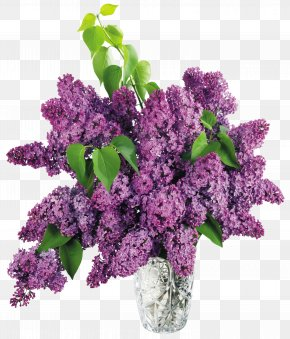 Vase With Purple Lilac Clipart Picture - Lilac Flower Clip Art PNG