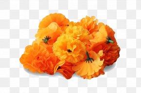 Marigold Transparent Image - Mexican Marigold Flower Clip Art PNG
