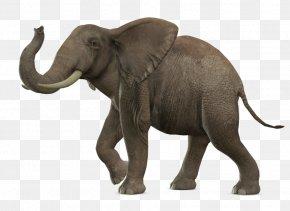 Elephant - African Bush Elephant Asian Elephant PNG