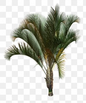 Tree - Arecaceae Tree Plant Drawing Areca Palm PNG