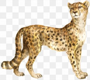 Cheetah - Cheetah The Bedlam Stacks Cat Felidae Cougar PNG