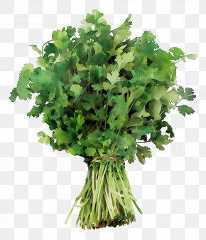 Coriander Parsley Spring Greens Recipe PNG