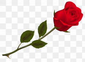 Transparent Beautiful Red Rose Picture - Rose Wallpaper PNG