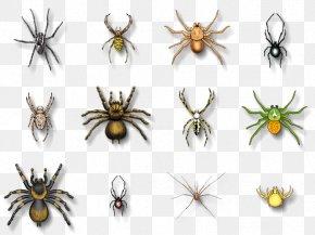 Spider - Spider Bite Southern Black Widow Chilean Recluse Spider Animal Bite PNG