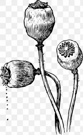 Poppy - Poppy Seed Opium Poppy California Poppy Drawing PNG