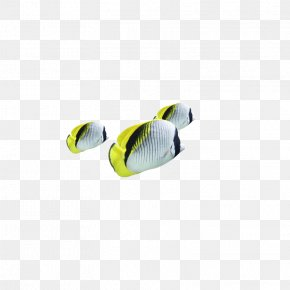 Tropical Fish - Personal Protective Equipment Yellow Shoe PNG