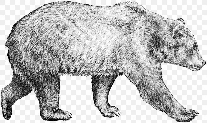 Brown Bear Drawing Grizzly Bear Sketch, PNG, 1110x665px, Bear, Art ...