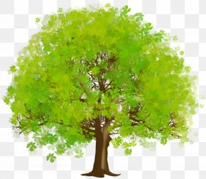 Large Green Tree Clipart - Tree Green Clip Art PNG