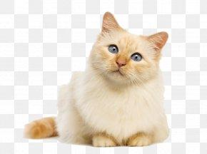 Cat - Cat Food Kitten Felidae Dog PNG
