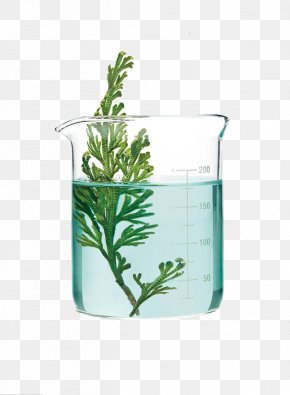 Glass Of Green Plants - Aquatic Plants Glass Science PNG