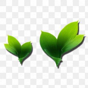 Leaf - Leaf Petal PNG