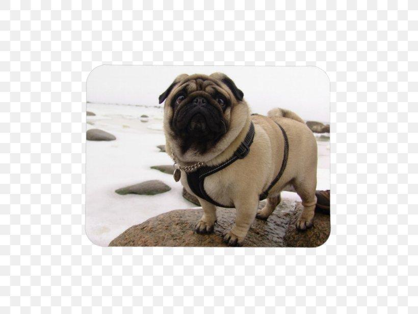 Puggle Dog Breed Mouse Mats Toy Dog, PNG, 615x615px, Pug, Bear, Breed, Carnivoran, Collar Download Free
