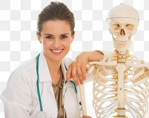 Skeleton - Human Skeleton Bone Density Joint PNG