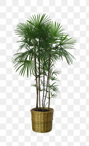 Potted Palm Trees - Flowerpot Houseplant Garden PNG
