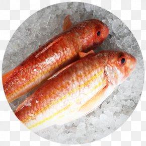 Cherne Altovise - Restaurante Senhor Peixe Rascasse Scorpaena Scrofa Fish PNG