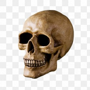 Skull - Skull U9ab7u9ac5 Bone Head PNG