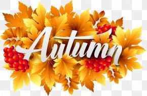 Autumn Decorative Image Clipart - Autumn Clip Art PNG