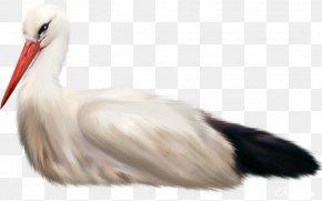 Bird - White Stork Water Bird Animal Seabird PNG