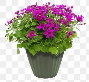 Flower Pot - Maharashtra Public Service Commission Flowerpot MPEG-4 Part 14 PNG