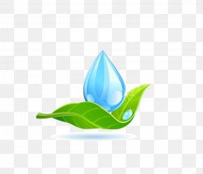 Water Droplets Green Leaf - Leaf Water Logo Drop PNG