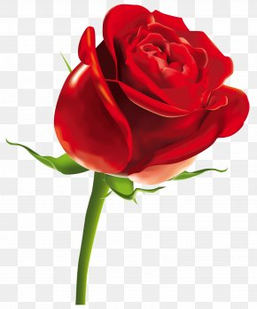 Red Rose Clipart Picture - Rose Computer File PNG