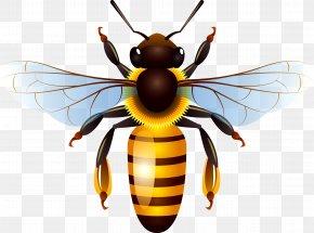 Bee - Honey Bee Honey Bee Clip Art PNG