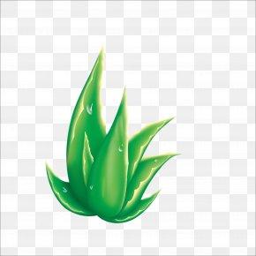 Aloe - Aloe Raster Graphics Euclidean Vector PNG