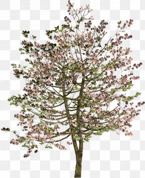 Spring Tree - Tree Shrub Twig Clip Art PNG