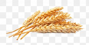 Golden Wheat - Atta Flour Whole-wheat Flour Cereal Seed PNG