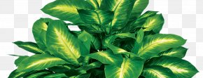 Plant - Silk Artificial Flower Plant Tree Areca Palm PNG
